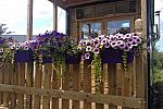 Verandah with flowers